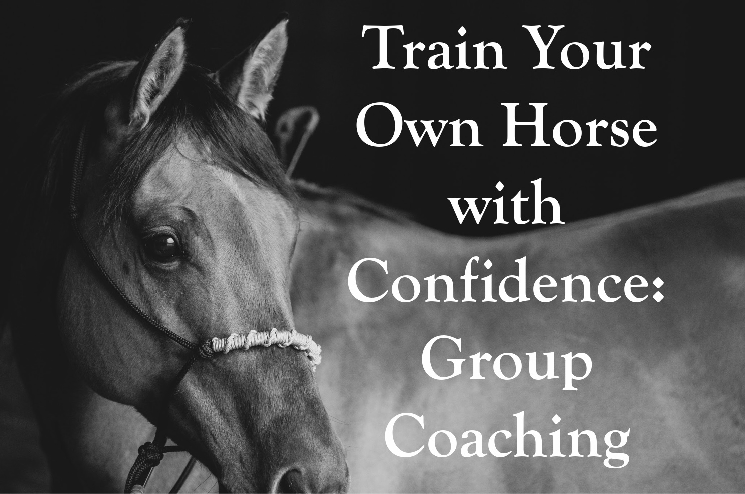 Train your own horse with confidence group