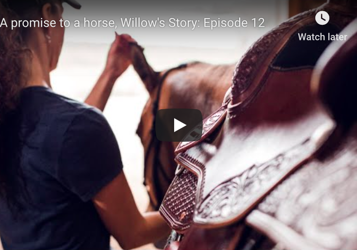 A promise to a horse, Willows story