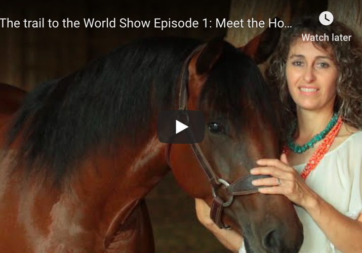 Meet the horses, Trail to the World Show, Stacy Westfall