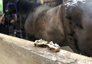 Presto horse teeth caps