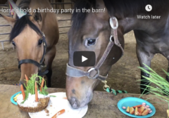horses eating birthday cake at table with carrots apples peppermints