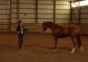 reading horse body language pawing