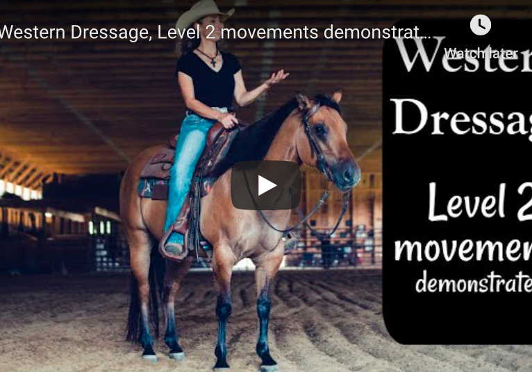 Western Dressage Level 2 movements demonstrated