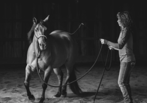 Why lunge a horse before riding