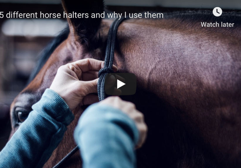 choosing a halter for your horse