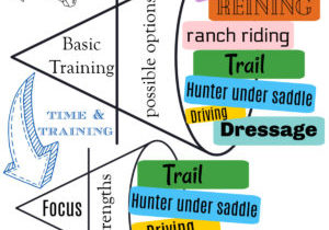 evaluating horses potential different disciplines